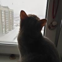 Снежный флешмоб: омичи выкладывают фото заснеженных дворов в интернет