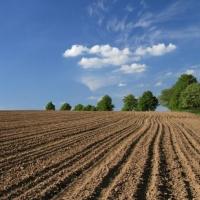 Омским аграриям пришлось дважды засевать поля