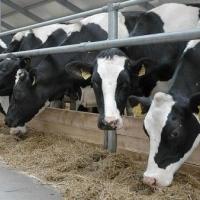 Омской области выделили более восьми миллионов рублей на развитие мясного скотоводства