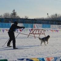 В Омске пройдут соревнования по ездовому спорту «ГИПЕРБОРЕЯ-2016»