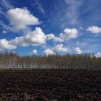 С учетом господдержки кредиты для омских фермеров стали доступнее