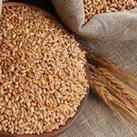 Омская область готовится продавать зерно по более выгодным ценам