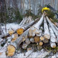 В Омской области незаконно вырубили более 14 тысяч кубометров леса