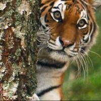 Объявлен всероссийский конкурс по совершенствованию природоохранного законодательства