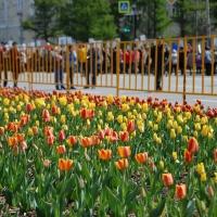 Омск украсят 2,5 миллиона цветов