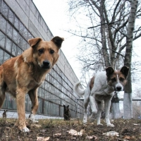 Обсуждение нарушений в работе омского учреждения по отлову собак перенесли