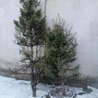 Омские полицейские нашли злоумышленников по следу еловых иголок
