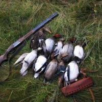 В Омской области могут отменить весеннюю охоту