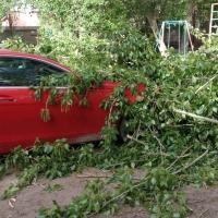 Мэр Омска поручил как можно быстрее устранить последствия урагана