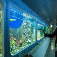 В Омске пройдут бесплатные занятия для любителей аквариумных рыбок
