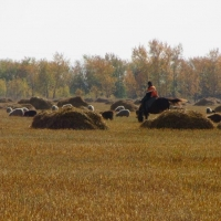 Бурков и Варнавский поблагодарили омских аграриев за хороший урожай