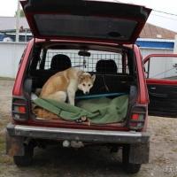 Охотник из Омского района за убитую косулю выплатил половину ущерба