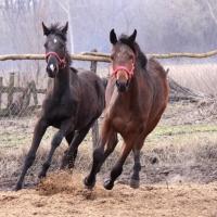 Суд вынес наказание виновным в хищении 26-ти лошадей в Омской области