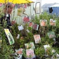 Омичей пригласили поучаствовать в ярмарке «Весенний сад»