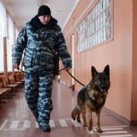 Обеспечивать безопасность на выборах в Омской области будут 2700 полицейских