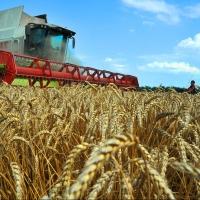 Омская область держится в пятерке лидеров агропромышленных регионов страны
