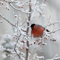 В выходные в Омской области ударят морозы