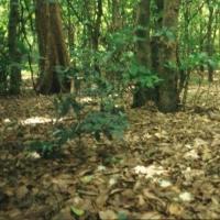 Спасатели просят омичей не ходить в лес