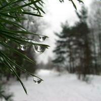 С февралем в Омск пришло тепло