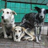 Омский приют для собак «Друг» разгромили неизвестные