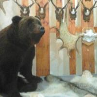 Омское Минприроды проведет жеребьевку на добычу медведя