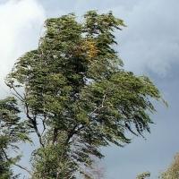 МЧС предупреждает о сильном ветре