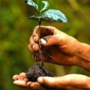 Как правильно покупать саженцы деревьев и кустов