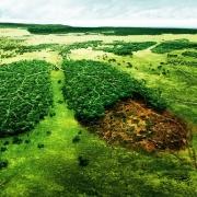 Экс-депутат омского Заксобрания проследит за лесами из космоса