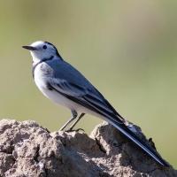 Весной омичей приглашают понаблюдать за птицами