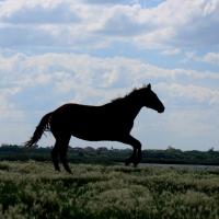 Житель Омской области получил условный срок за то, что расстрелял лошадей