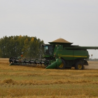 В Омской области уже убрано в 2 раза больше зерна по сравнению с прошлогодними показателями
