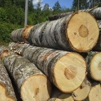 Чиновники из Омской области покупали древесину через госзакупки на личные нужды
