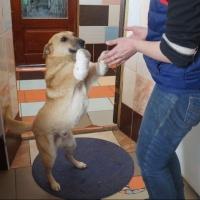 Омский приют ищет помощника для транспортировки двулапого пса