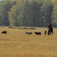 Омской области на 178,4 миллиона рублей  увеличили субсидии на уплату процентов по кредитам