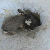 Омичи вспомнили историю о кролике, который стал «отцом» для троих щенят