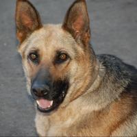 Омичей приглашают обсудить появление площадки для выгула собак в парке имени 30-летия ВЛКСМ