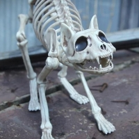В Омске в частном доме обнаружены тела мужчины и 39 кошек