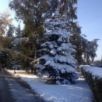 В Омскую область пробирается зима