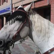 Конь претендует на должность мэра Новосибирска