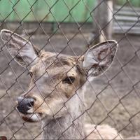Обитатели Большереченского зоопарка ждут своих опекунов