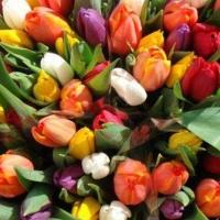 Омич решил подзаработать на тюльпанах и в итоге потерял 48 тысяч рублей