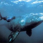 Омичи заглянут внутрь кита
