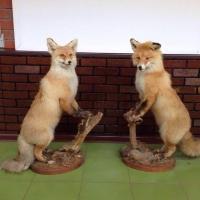 Омские охотоведы приступили к зимнему учету диких животных