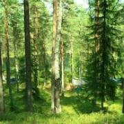 День работника леса будут отмечать 19 сентября представители лесной промышленности Омской области