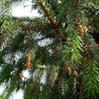 Вырубку деревьев на Зеленом острове пытается компенсировать мэрия Омска