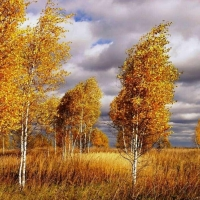 В воскресение в Омской области похолодает и поднимется ветер