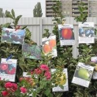 В Омске садоводам продавали непонятные саженцы