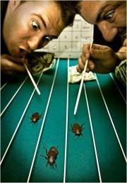 Первый омский чемпионат по тараканьим бегам