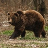 Омских охотников просят передать сведения о добыче