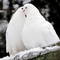 14 февраля на улицах Омска пройдет бесплатная фотосессия с голубем